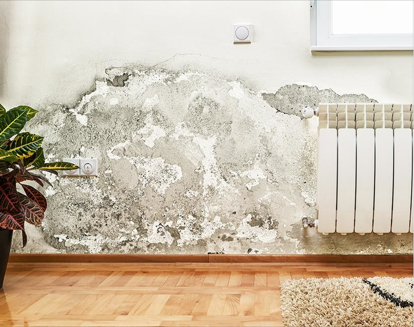 Summertime Mold Risks