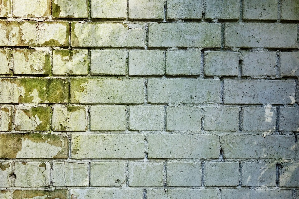 white brick wall with green mold and mildew