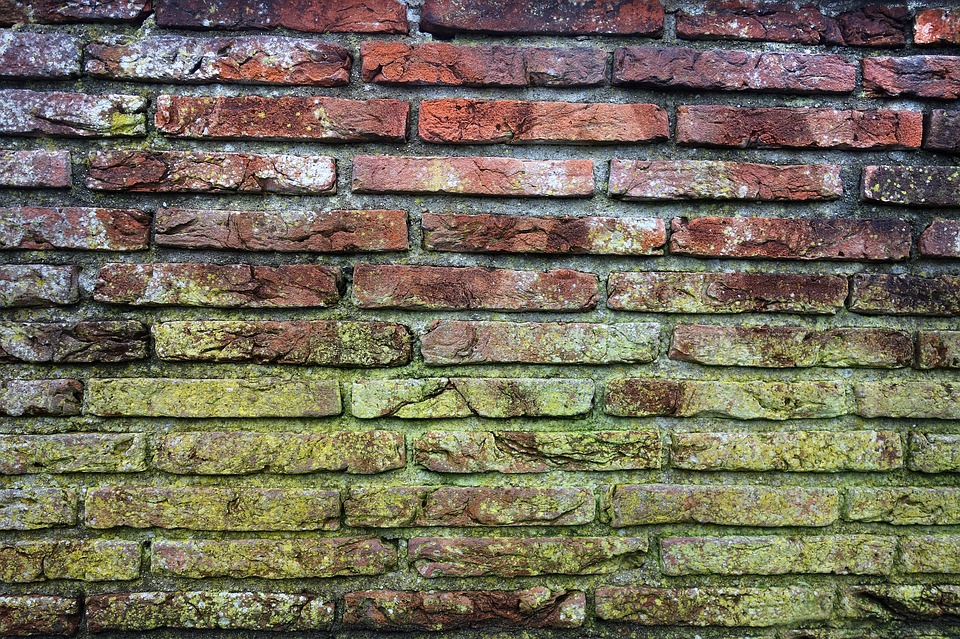 red brick wall covered in green mold