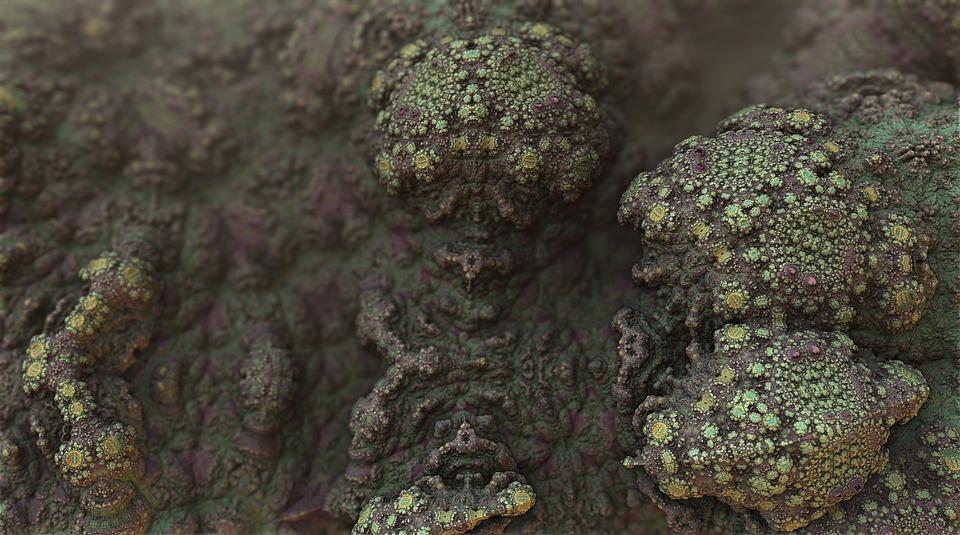 fungal mold spores