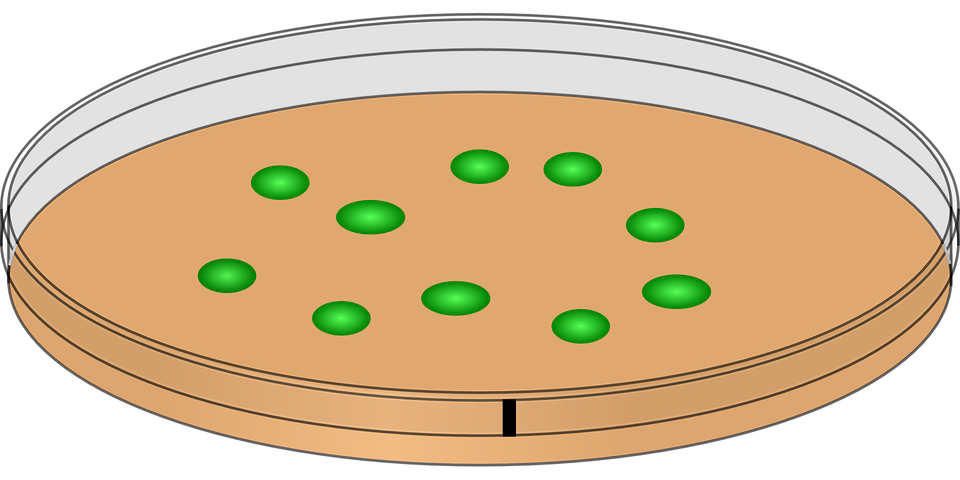 drawing of petri dish with mold spores